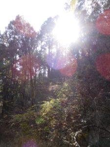 Jeu de lumière en forêt au Bhoutan